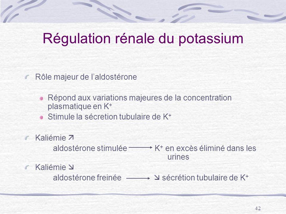 42 Régulation rénale du potassium Rôle majeur de laldostérone Répond aux variations majeures de la concentration plasmatique en K + Stimule la sécreti