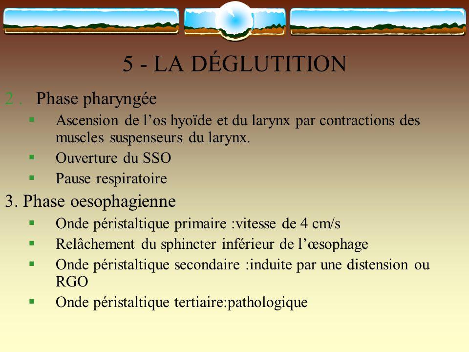 5 - LA DÉGLUTITION 2.Phase pharyngée Ascension de los hyoïde et du larynx par contractions des muscles suspenseurs du larynx. Ouverture du SSO Pause r