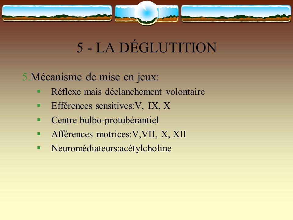 5 - LA DÉGLUTITION 5.Mécanisme de mise en jeux: Réflexe mais déclanchement volontaire Efférences sensitives:V, IX, X Centre bulbo-protubérantiel Affér