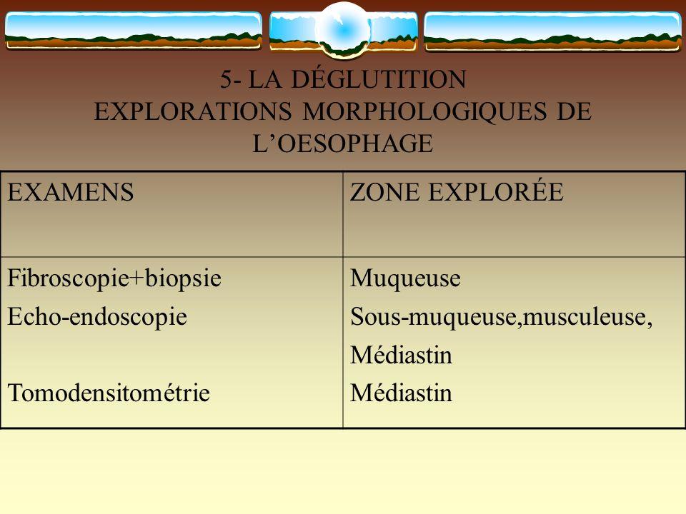 5- LA DÉGLUTITION EXPLORATIONS MORPHOLOGIQUES DE LOESOPHAGE EXAMENSZONE EXPLORÉE Fibroscopie+biopsie Echo-endoscopie Tomodensitométrie Muqueuse Sous-m