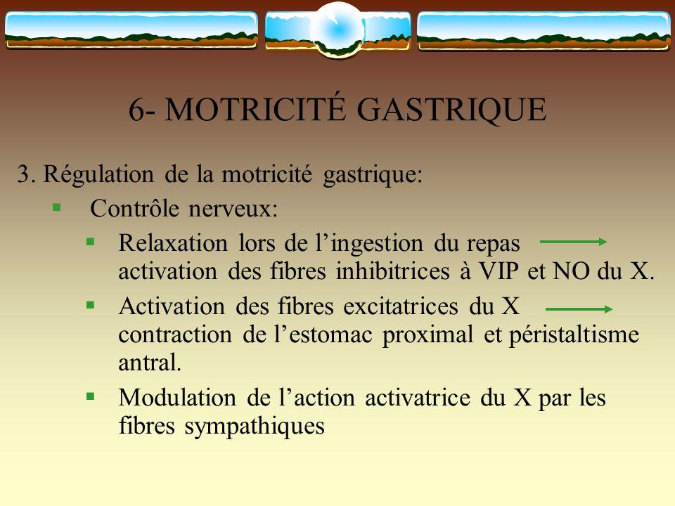6- MOTRICITÉ GASTRIQUE 3. Régulation de la motricité gastrique: Contrôle nerveux: Relaxation lors de lingestion du repas activation des fibres inhibit