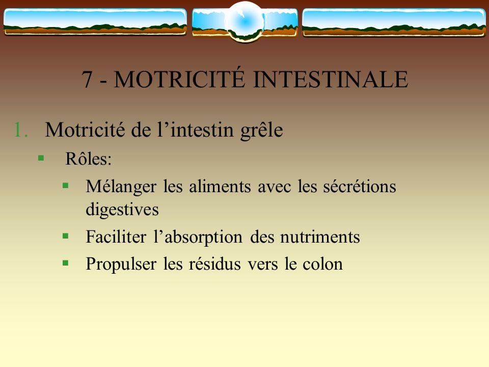 7 - MOTRICITÉ INTESTINALE 1.Motricité de lintestin grêle Rôles: Mélanger les aliments avec les sécrétions digestives Faciliter labsorption des nutrime