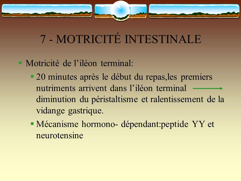 7 - MOTRICITÉ INTESTINALE Motricité de liléon terminal: 20 minutes après le début du repas,les premiers nutriments arrivent dans liléon terminal dimin
