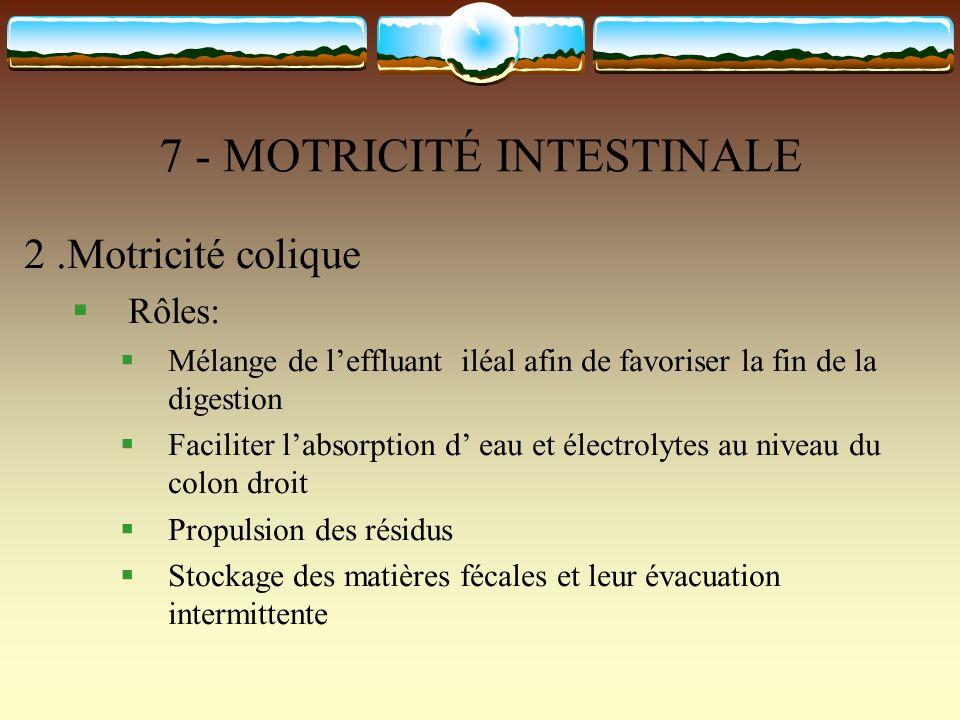 7 - MOTRICITÉ INTESTINALE 2.Motricité colique Rôles: Mélange de leffluant iléal afin de favoriser la fin de la digestion Faciliter labsorption d eau e