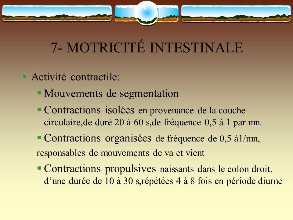 7- MOTRICITÉ INTESTINALE Activité contractile: Mouvements de segmentation Contractions isolées en provenance de la couche circulaire,de duré 20 à 60 s