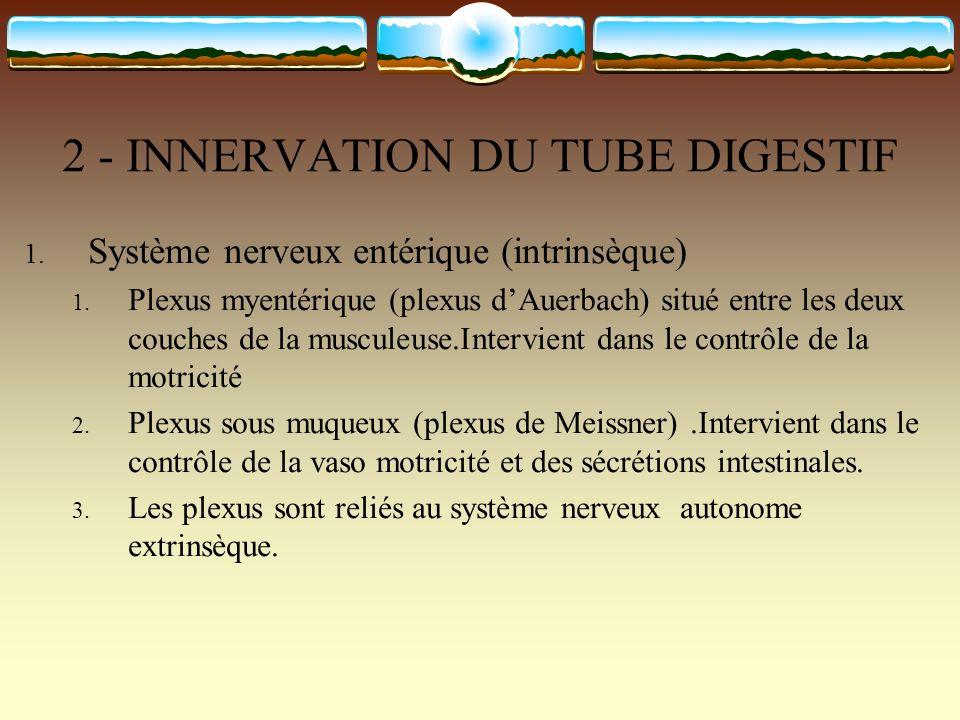 2 - INNERVATION DU TUBE DIGESTIF 1. Système nerveux entérique (intrinsèque) 1. Plexus myentérique (plexus dAuerbach) situé entre les deux couches de l