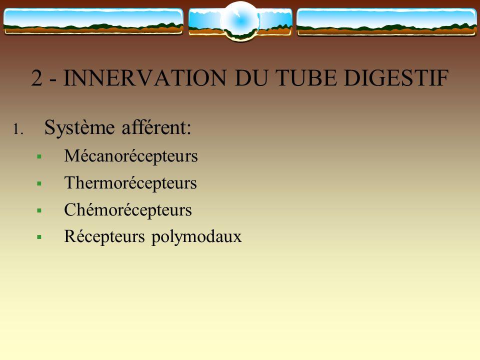 2 - INNERVATION DU TUBE DIGESTIF 1. Système afférent: Mécanorécepteurs Thermorécepteurs Chémorécepteurs Récepteurs polymodaux
