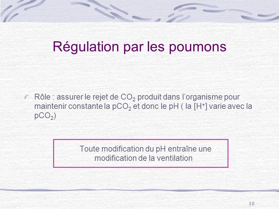 10 Régulation par les poumons Rôle : assurer le rejet de CO 2 produit dans lorganisme pour maintenir constante la pCO 2 et donc le pH ( la [H + ] vari