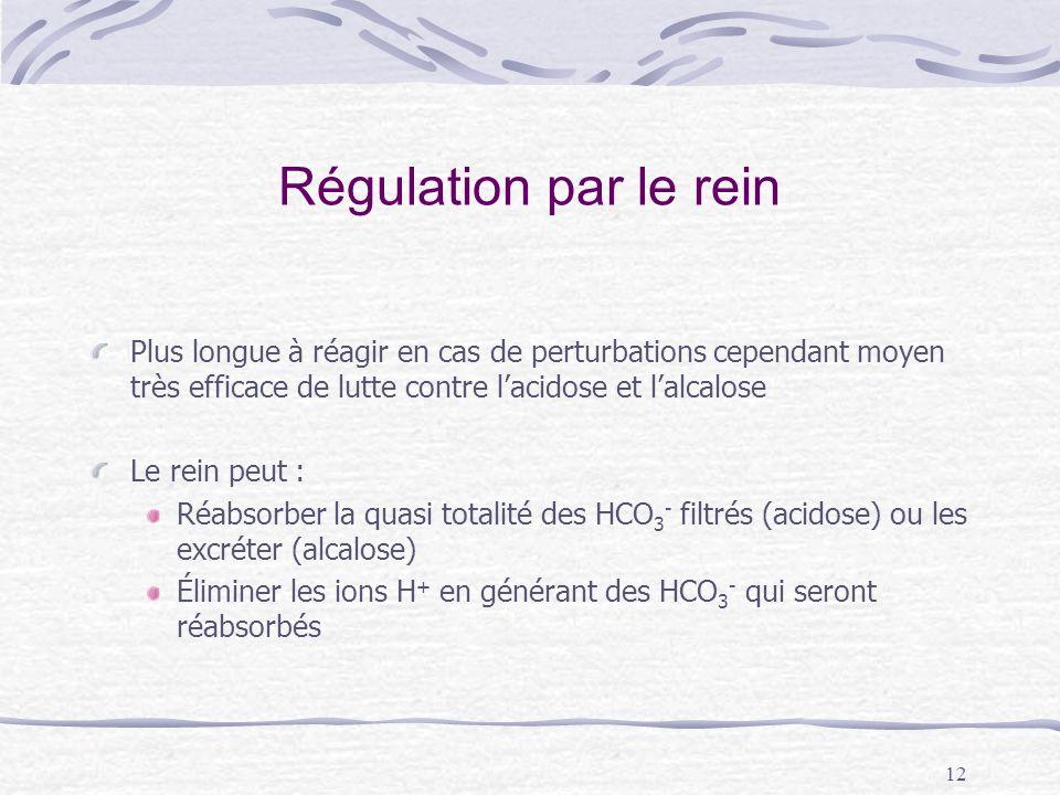 12 Régulation par le rein Plus longue à réagir en cas de perturbations cependant moyen très efficace de lutte contre lacidose et lalcalose Le rein peu