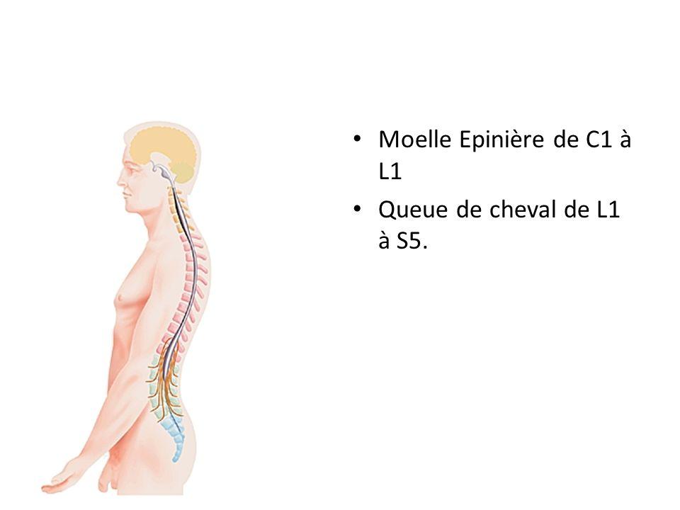 ANATOMIE DU RACHIS SEGMENT MOBILE RACHIDIEN: – Ligaments – Capsule articulaire postérieure – Disque vertébral