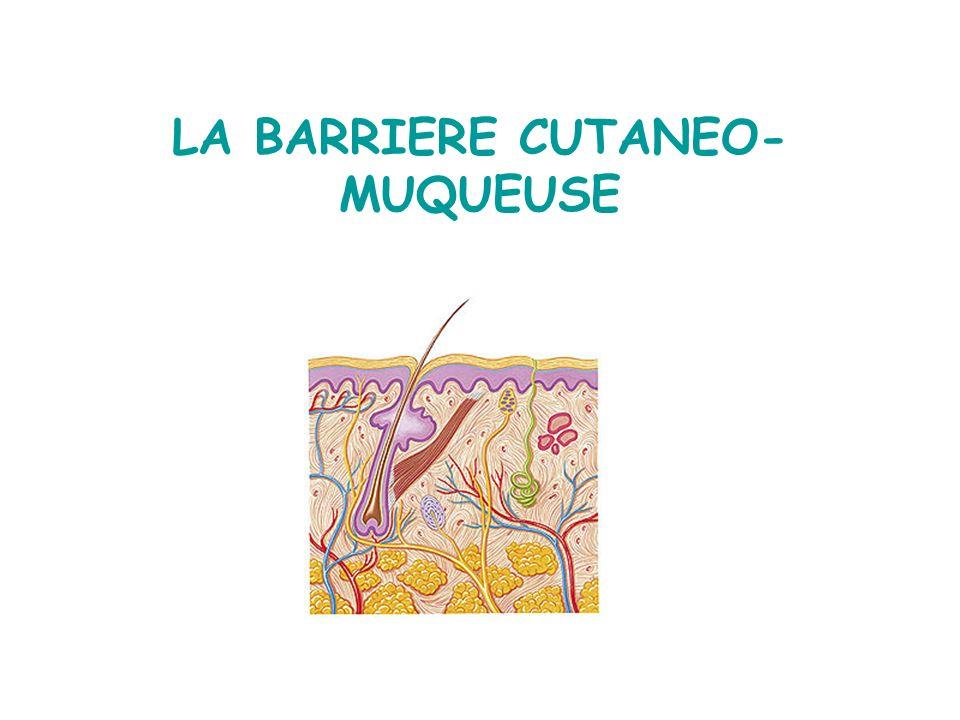 LA BARRIERE CUTANEO- MUQUEUSE