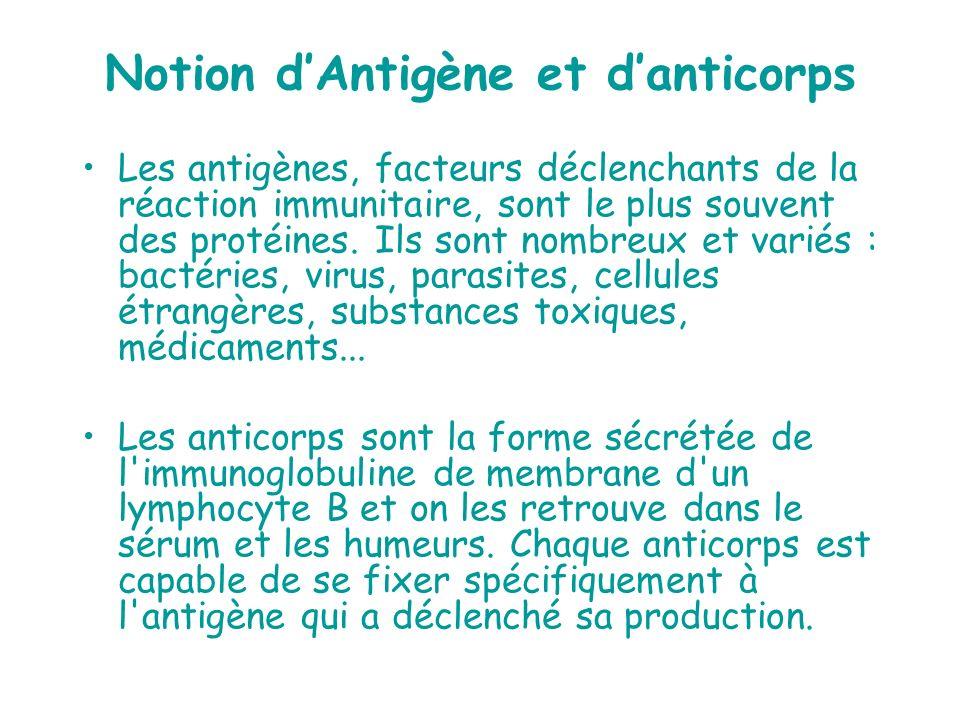 Notion dAntigène et danticorps Les antigènes, facteurs déclenchants de la réaction immunitaire, sont le plus souvent des protéines. Ils sont nombreux