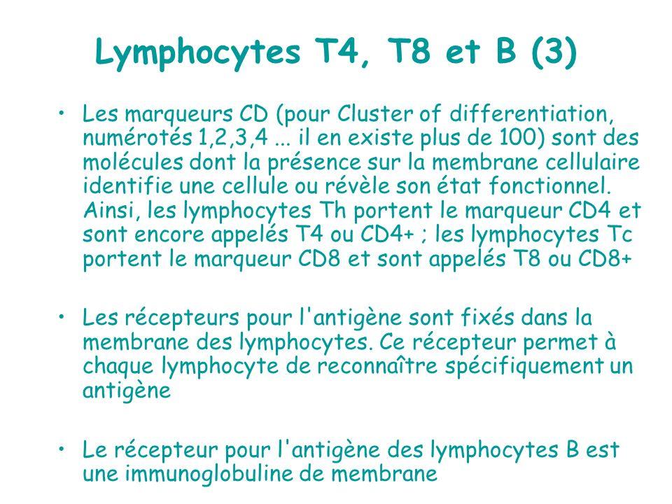 Lymphocytes T4, T8 et B (3) Les marqueurs CD (pour Cluster of differentiation, numérotés 1,2,3,4... il en existe plus de 100) sont des molécules dont