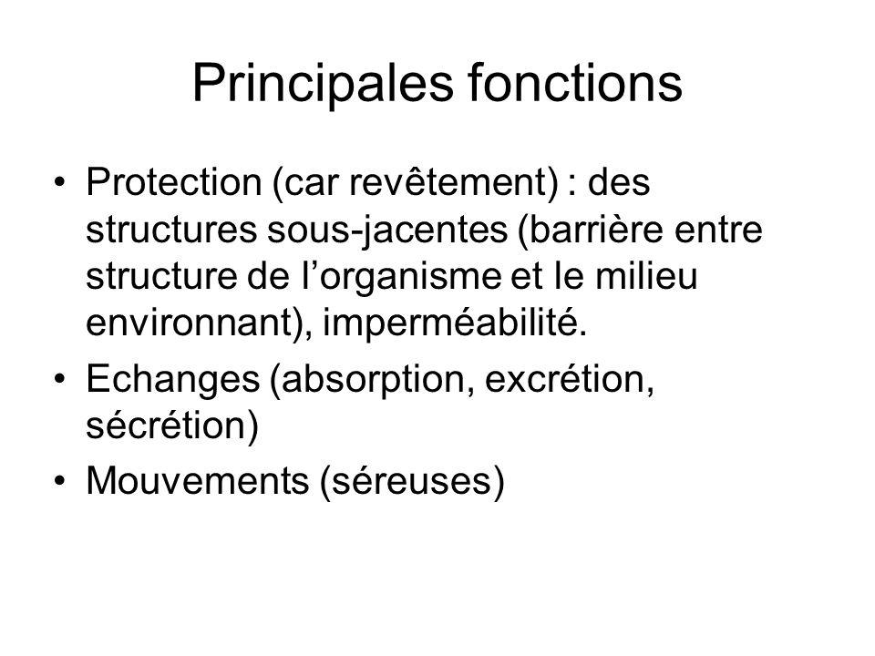 Principales fonctions Protection (car revêtement) : des structures sous-jacentes (barrière entre structure de lorganisme et le milieu environnant), im