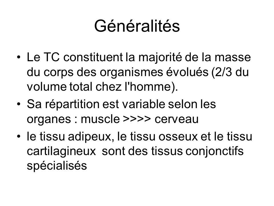 Généralités Le TC constituent la majorité de la masse du corps des organismes évolués (2/3 du volume total chez l'homme). Sa répartition est variable