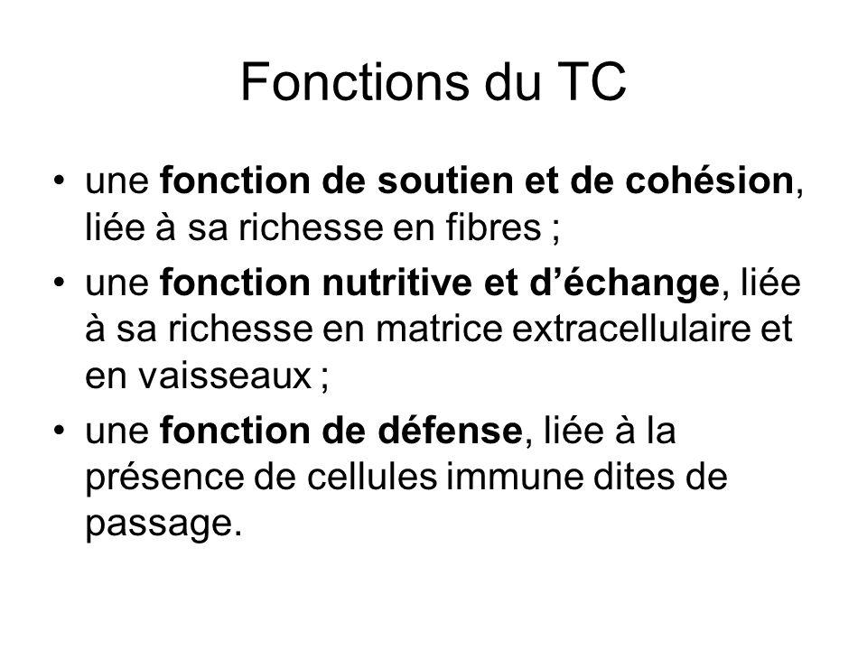 Fonctions du TC une fonction de soutien et de cohésion, liée à sa richesse en fibres ; une fonction nutritive et déchange, liée à sa richesse en matri