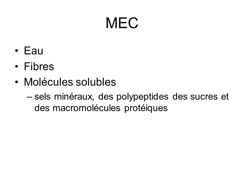 MEC Eau Fibres Molécules solubles –sels minéraux, des polypeptides des sucres et des macromolécules protéiques