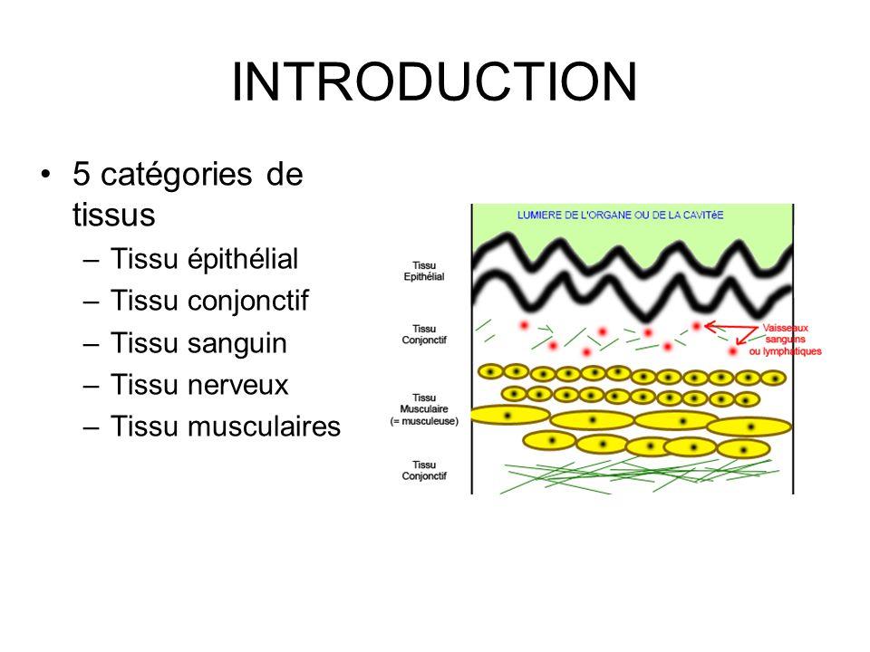 Cellules du tissu osseux les cellules bordantes –= ostéoblastes au repos, qui, en cas de besoin, sont capables de s activer et de se re-différencier en ostéoblastes les ostéoclastes –Il sagit de cellules géantes (20 à 100 microns de diamètre), plurinucléées et hautement mobiles.