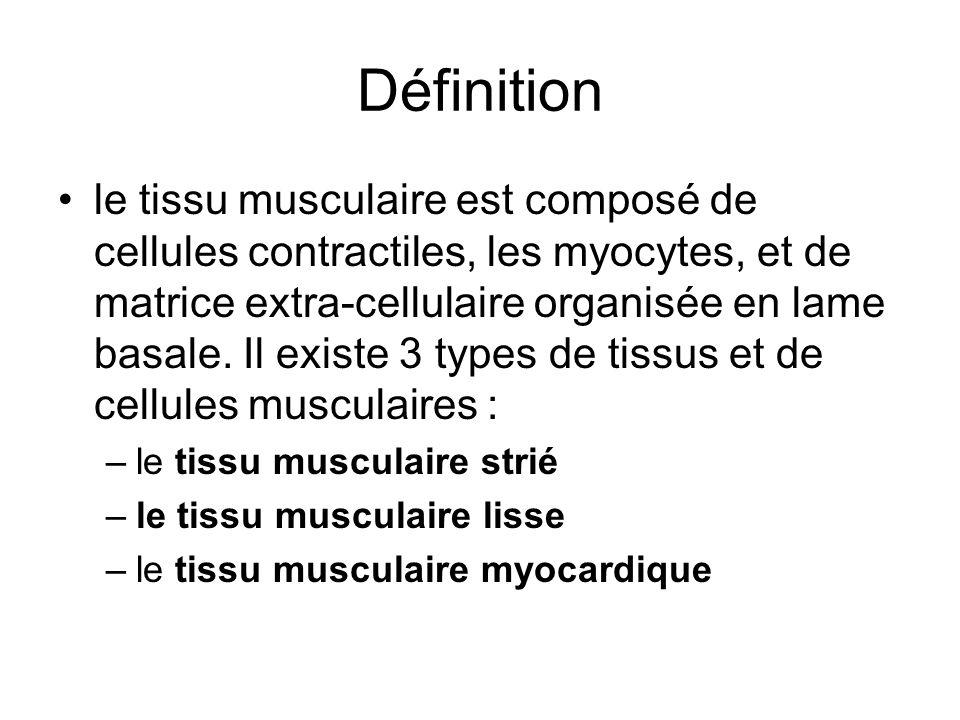 Définition le tissu musculaire est composé de cellules contractiles, les myocytes, et de matrice extra-cellulaire organisée en lame basale. Il existe