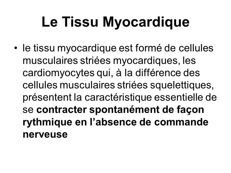 Le Tissu Myocardique le tissu myocardique est formé de cellules musculaires striées myocardiques, les cardiomyocytes qui, à la différence des cellules
