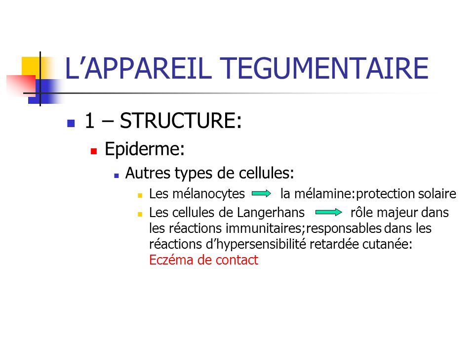 LAPPAREIL TEGUMENTAIRE 1 – STRUCTURE: Epiderme: Autres types de cellules: Les mélanocytes la mélamine:protection solaire Les cellules de Langerhansrôl