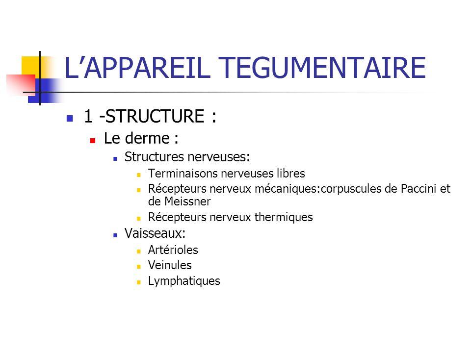 LAPPAREIL TEGUMENTAIRE 1 -STRUCTURE : Le derme : Structures nerveuses: Terminaisons nerveuses libres Récepteurs nerveux mécaniques:corpuscules de Pacc