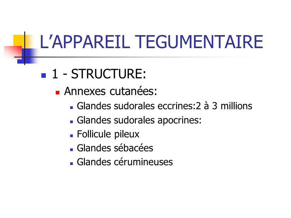 LAPPAREIL TEGUMENTAIRE 1 - STRUCTURE: Annexes cutanées: Glandes sudorales eccrines:2 à 3 millions Glandes sudorales apocrines: Follicule pileux Glande
