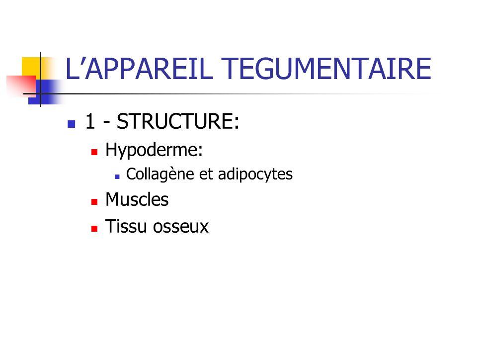 LAPPAREIL TEGUMENTAIRE 1 - STRUCTURE: Hypoderme: Collagène et adipocytes Muscles Tissu osseux