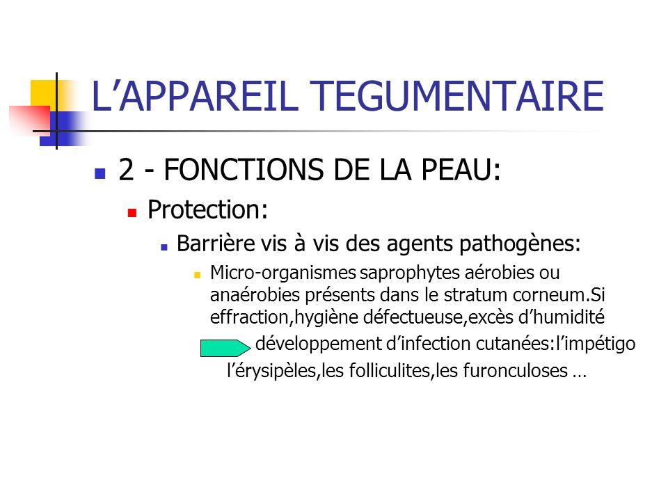 LAPPAREIL TEGUMENTAIRE 2 - FONCTIONS DE LA PEAU: Protection: Barrière vis à vis des agents pathogènes: Micro-organismes saprophytes aérobies ou anaéro