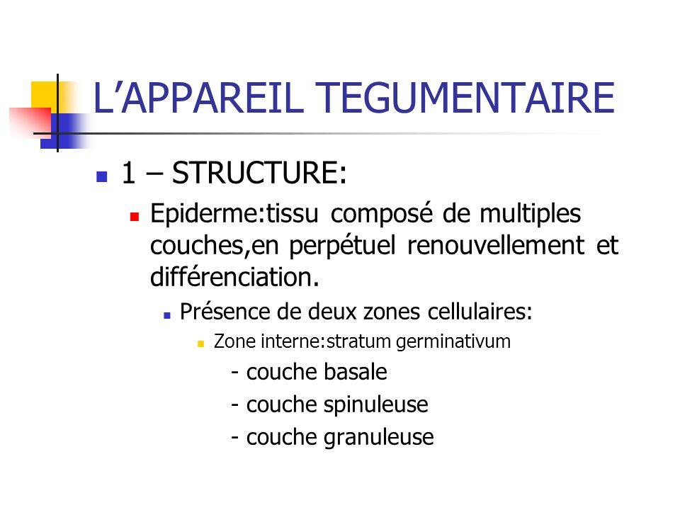 LAPPAREIL TEGUMENTAIRE 1 – STRUCTURE: Epiderme:tissu composé de multiples couches,en perpétuel renouvellement et différenciation. Présence de deux zon