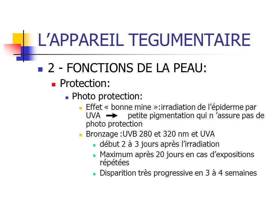 LAPPAREIL TEGUMENTAIRE 2 - FONCTIONS DE LA PEAU: Protection: Photo protection: Effet « bonne mine »:irradiation de lépiderme par UVA petite pigmentati