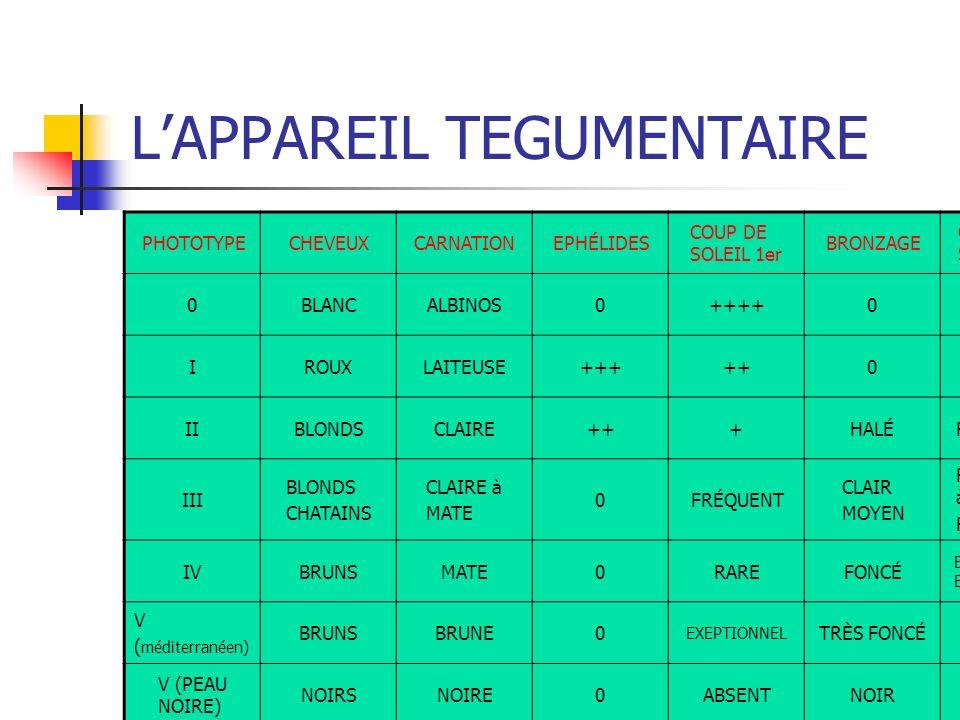 LAPPAREIL TEGUMENTAIRE PHOTOTYPECHEVEUXCARNATIONEPHÉLIDES COUP DE SOLEIL 1er BRONZAGE COUP DE SOLEIL 3S 0BLANCALBINOS0++++0 IROUXLAITEUSE+++++0 IIBLON