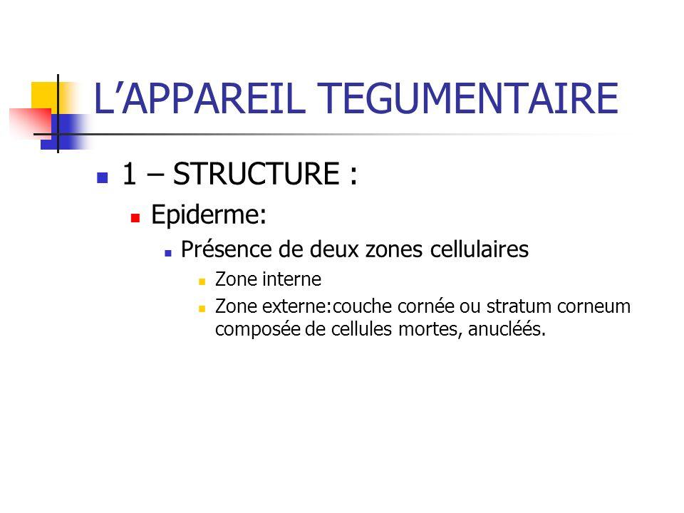 LAPPAREIL TEGUMENTAIRE 1 – STRUCTURE : Epiderme: Présence de deux zones cellulaires Zone interne Zone externe:couche cornée ou stratum corneum composé