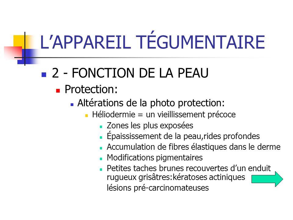 LAPPAREIL TÉGUMENTAIRE 2 - FONCTION DE LA PEAU Protection: Altérations de la photo protection: Héliodermie = un vieillissement précoce Zones les plus