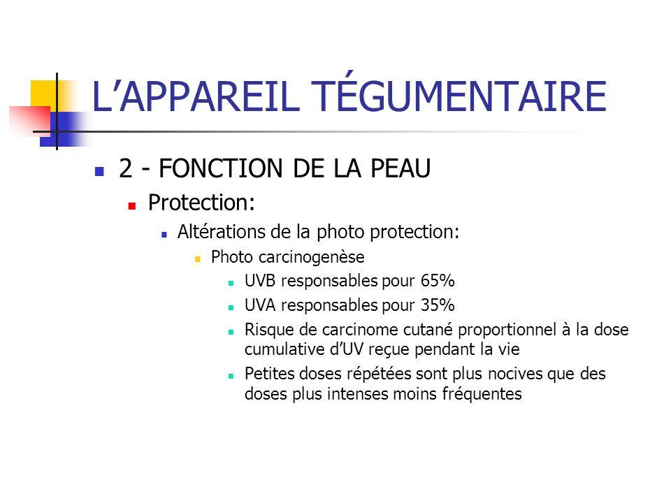 LAPPAREIL TÉGUMENTAIRE 2 - FONCTION DE LA PEAU Protection: Altérations de la photo protection: Photo carcinogenèse UVB responsables pour 65% UVA respo