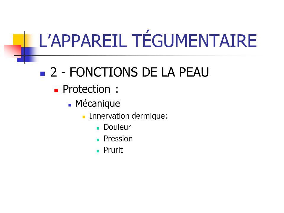 LAPPAREIL TÉGUMENTAIRE 2 - FONCTIONS DE LA PEAU Protection : Mécanique Innervation dermique: Douleur Pression Prurit