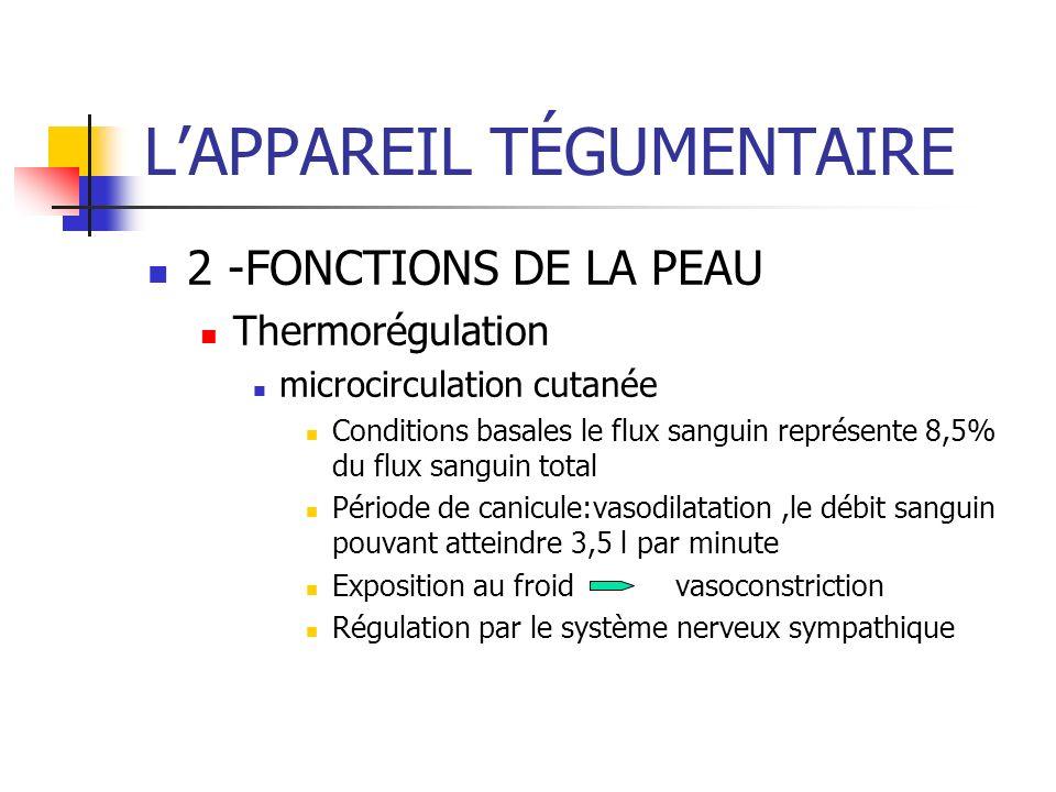 LAPPAREIL TÉGUMENTAIRE 2 -FONCTIONS DE LA PEAU Thermorégulation microcirculation cutanée Conditions basales le flux sanguin représente 8,5% du flux sa