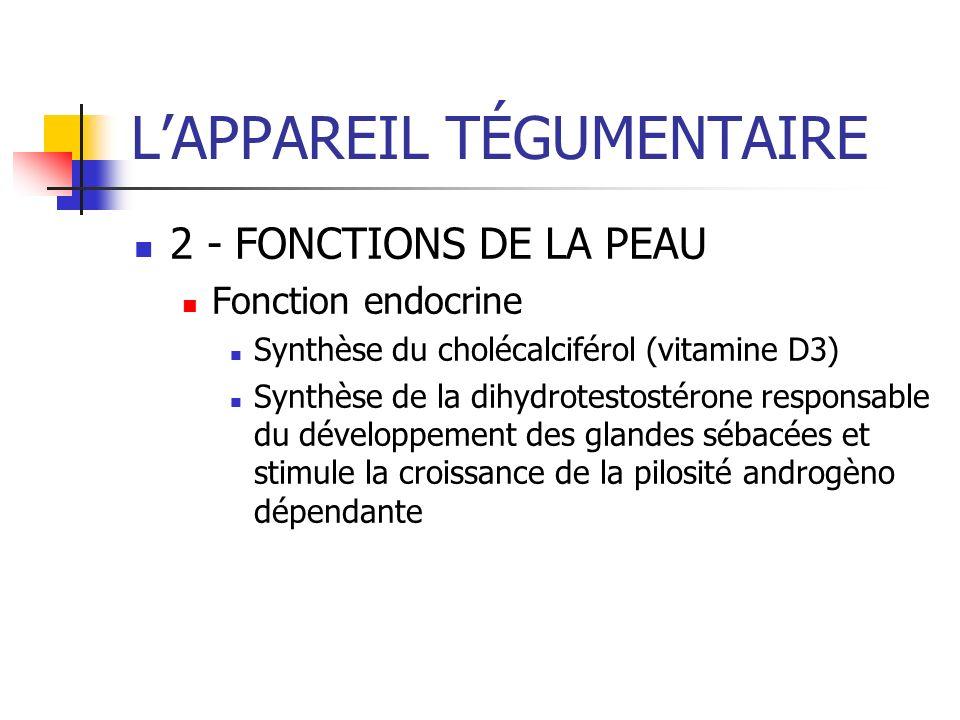 LAPPAREIL TÉGUMENTAIRE 2 - FONCTIONS DE LA PEAU Fonction endocrine Synthèse du cholécalciférol (vitamine D3) Synthèse de la dihydrotestostérone respon