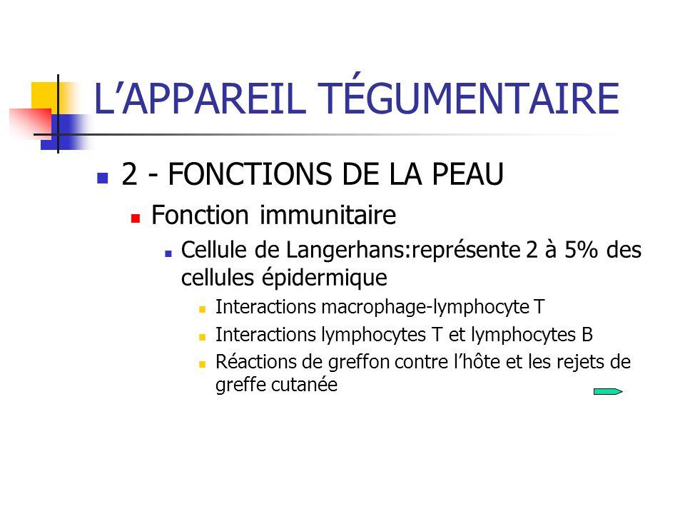 LAPPAREIL TÉGUMENTAIRE 2 - FONCTIONS DE LA PEAU Fonction immunitaire Cellule de Langerhans:représente 2 à 5% des cellules épidermique Interactions mac