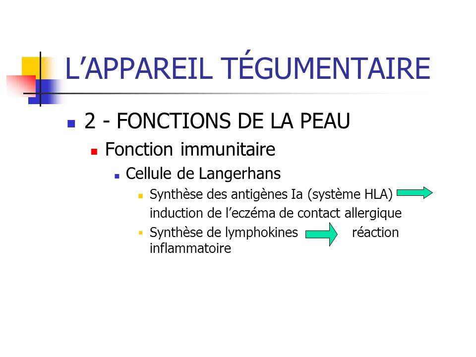 LAPPAREIL TÉGUMENTAIRE 2 - FONCTIONS DE LA PEAU Fonction immunitaire Cellule de Langerhans Synthèse des antigènes Ia (système HLA) induction de leczém