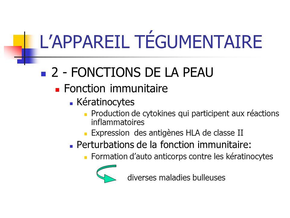 LAPPAREIL TÉGUMENTAIRE 2 - FONCTIONS DE LA PEAU Fonction immunitaire Kératinocytes Production de cytokines qui participent aux réactions inflammatoire