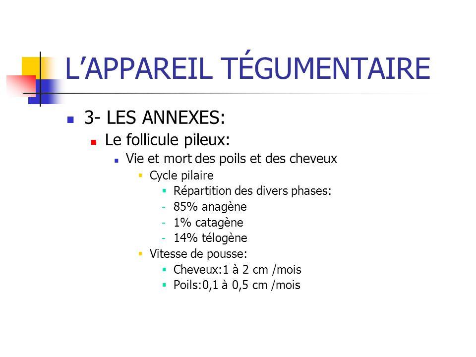 LAPPAREIL TÉGUMENTAIRE 3- LES ANNEXES: Le follicule pileux: Vie et mort des poils et des cheveux Cycle pilaire Répartition des divers phases: - 85% an