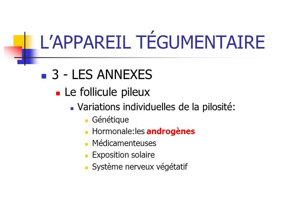 LAPPAREIL TÉGUMENTAIRE 3 - LES ANNEXES Le follicule pileux Variations individuelles de la pilosité: Génétique Hormonale:les androgènes Médicamenteuses