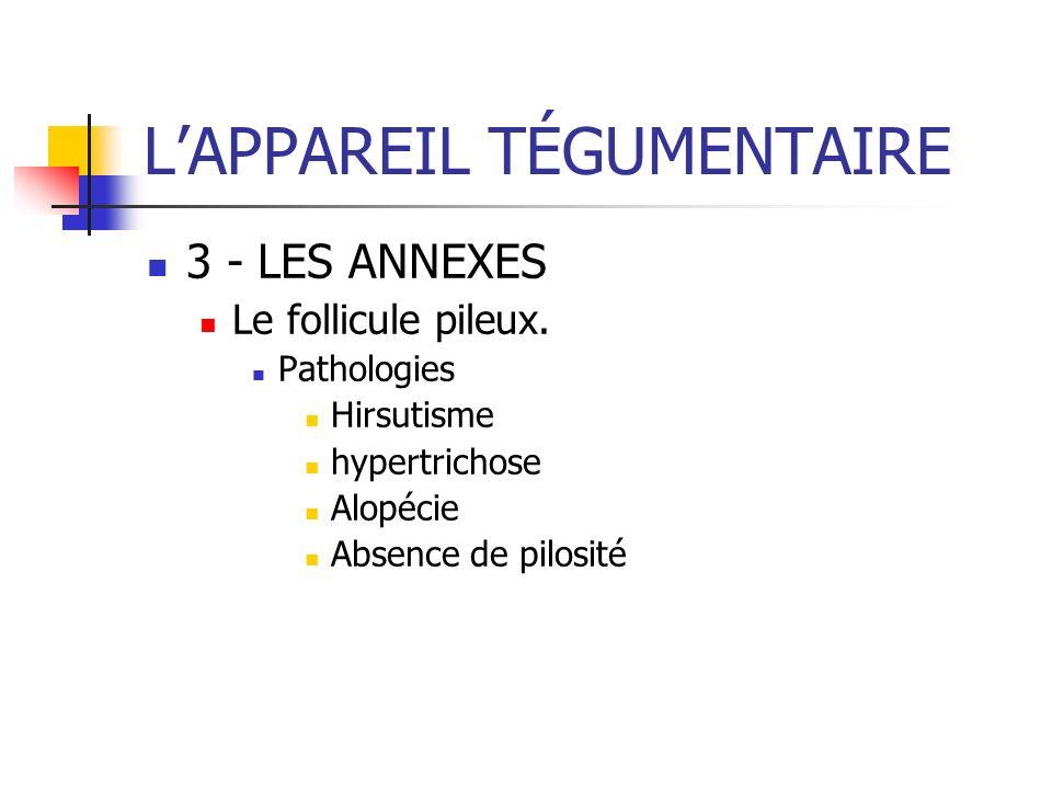 LAPPAREIL TÉGUMENTAIRE 3 - LES ANNEXES Le follicule pileux. Pathologies Hirsutisme hypertrichose Alopécie Absence de pilosité