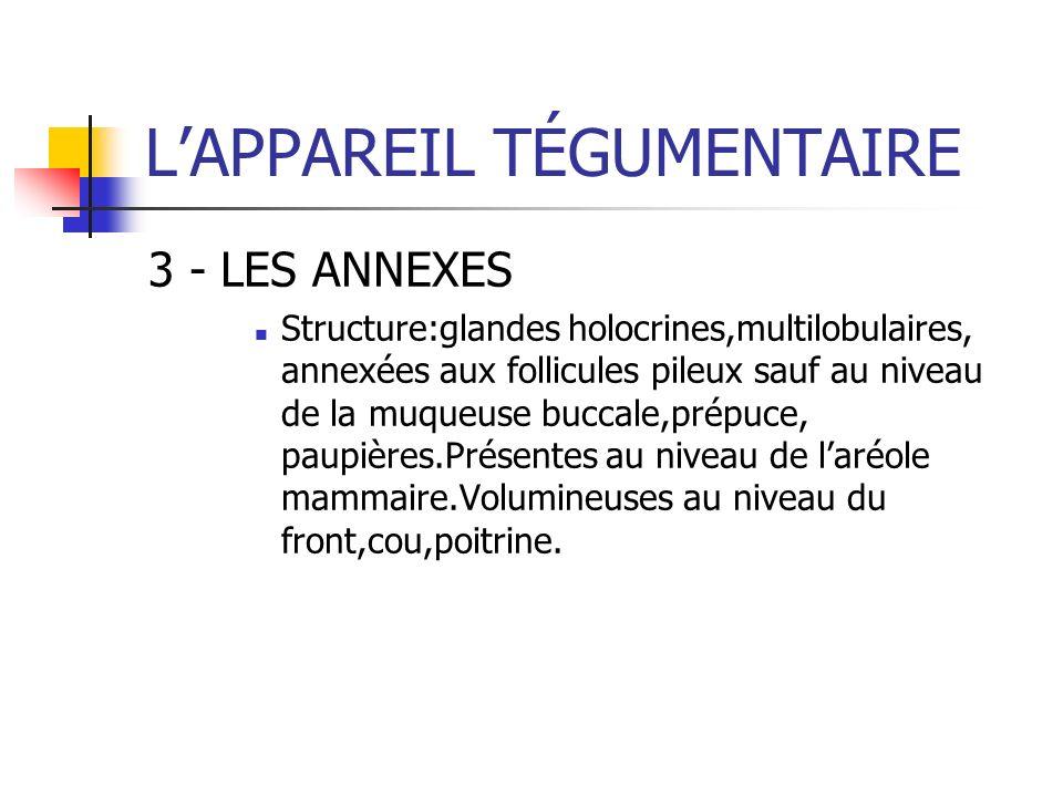 LAPPAREIL TÉGUMENTAIRE 3 - LES ANNEXES Structure:glandes holocrines,multilobulaires, annexées aux follicules pileux sauf au niveau de la muqueuse bucc