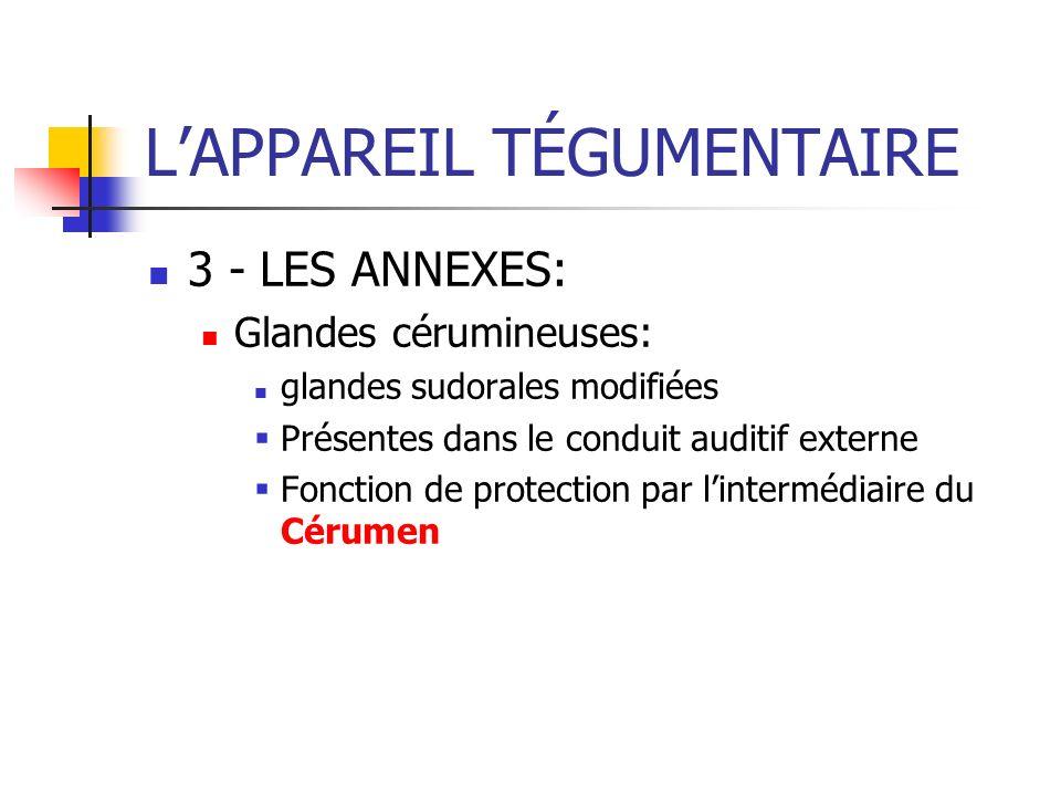 LAPPAREIL TÉGUMENTAIRE 3 - LES ANNEXES: Glandes cérumineuses: glandes sudorales modifiées Présentes dans le conduit auditif externe Fonction de protec