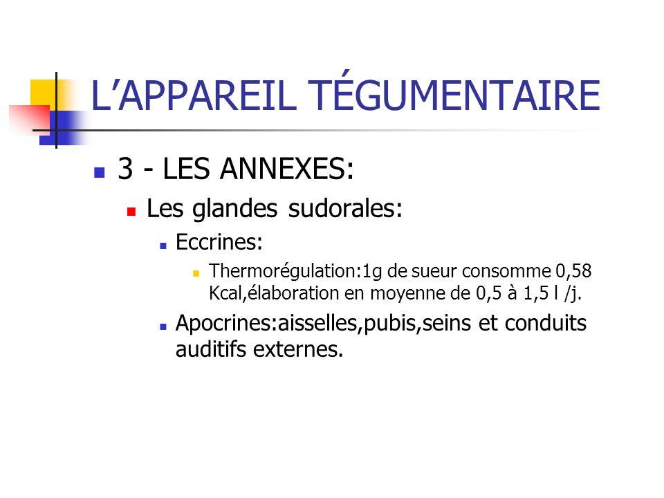 LAPPAREIL TÉGUMENTAIRE 3 - LES ANNEXES: Les glandes sudorales: Eccrines: Thermorégulation:1g de sueur consomme 0,58 Kcal,élaboration en moyenne de 0,5