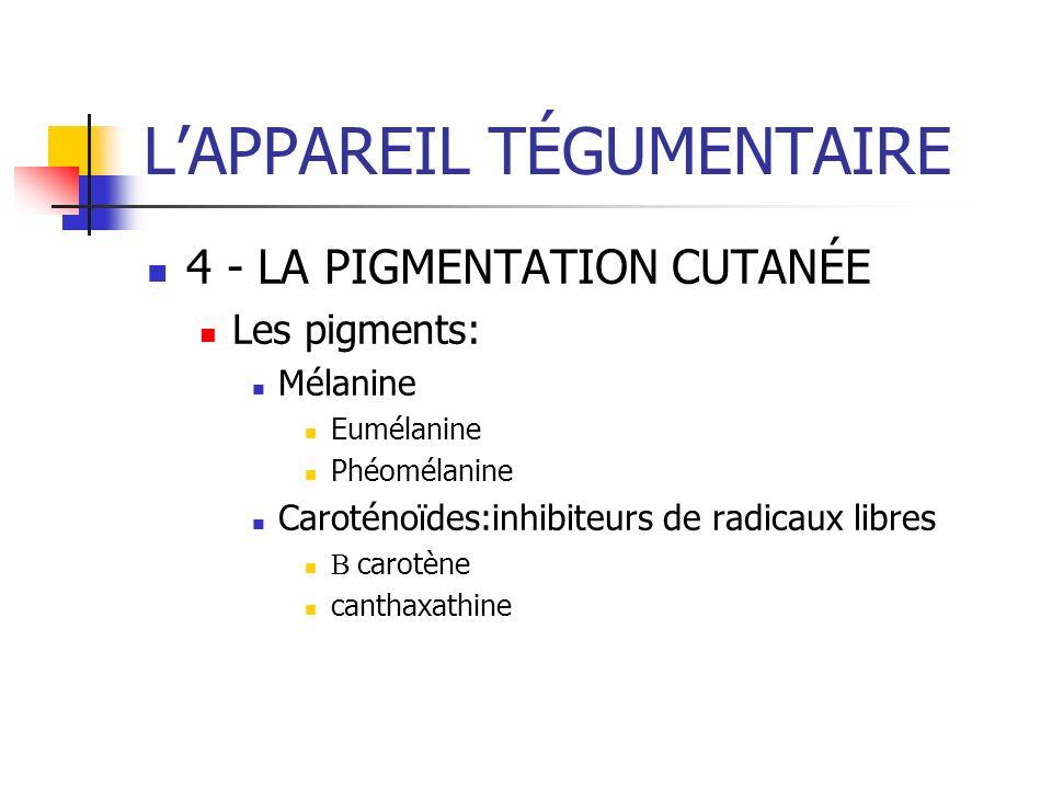 LAPPAREIL TÉGUMENTAIRE 4 - LA PIGMENTATION CUTANÉE Les pigments: Mélanine Eumélanine Phéomélanine Caroténoïdes:inhibiteurs de radicaux libres carotène