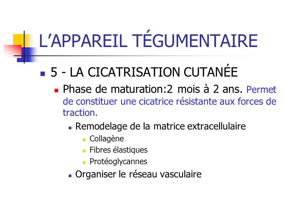 LAPPAREIL TÉGUMENTAIRE 5 - LA CICATRISATION CUTANÉE Phase de maturation:2 mois à 2 ans. Permet de constituer une cicatrice résistante aux forces de tr