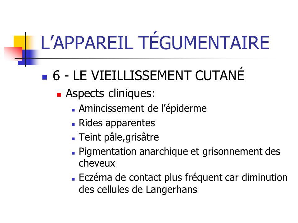 LAPPAREIL TÉGUMENTAIRE 6 - LE VIEILLISSEMENT CUTANÉ Aspects cliniques: Amincissement de lépiderme Rides apparentes Teint pâle,grisâtre Pigmentation an